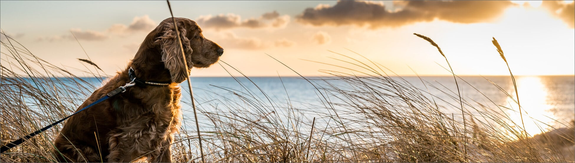 Outer Banks Pet Friendly Rentals Kees Outer Banks